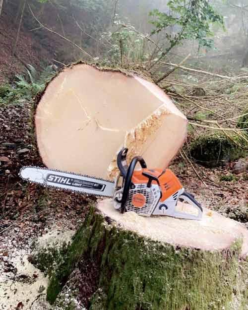 Stihl Forsttechnik Traurig
